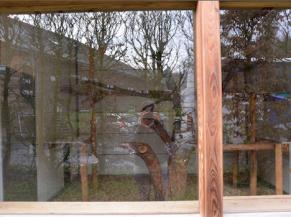 pavillon grands singes et puma: animaux difficilement visibles à cause du reflet dans les vitrages (pour tous) et de la hauteur de l'allège de fenêtre (enfants, personnes en fauteuil)