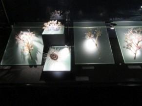 Reproduction d'intervertébrés marins par Blaschka
