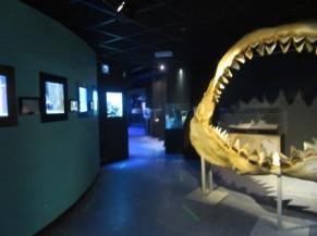 salle d'exposition dans l'aquarium