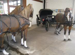 Absence de sécurisation des têtes de chevaux en saillie