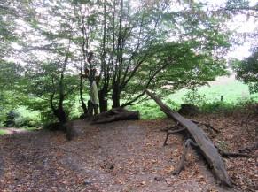 Sous bois avec un banc en forme de crocodile