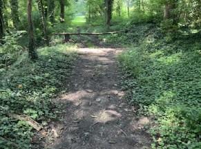 Cheminement dans les bois