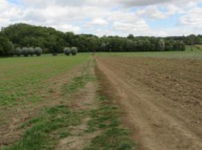 circuit au milieu des champs