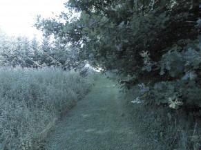 Chemin en gazon dans la partie promenade